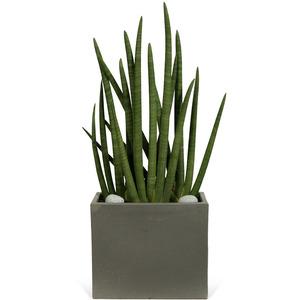 관엽식물(스투키) ft-5070 (높이 80~100cm)
